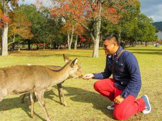 Feeding the deers at Nara, Japan