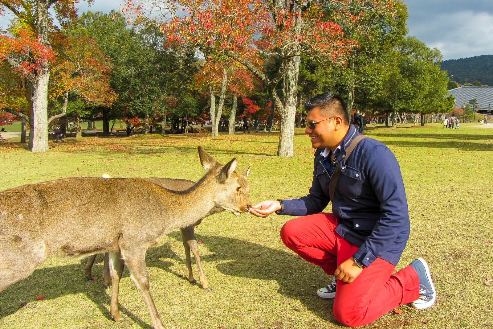 Feeding the deers at Nara, Japan