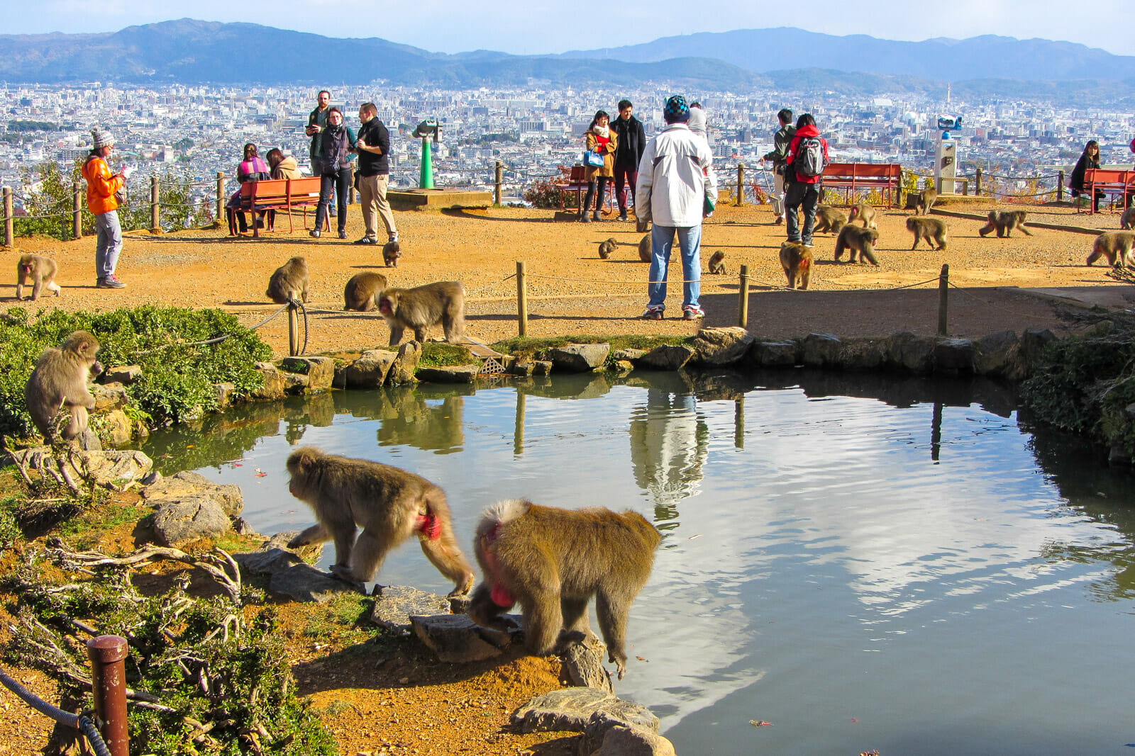 The Snow Monkey Sanctuary at the top of Arashiyama