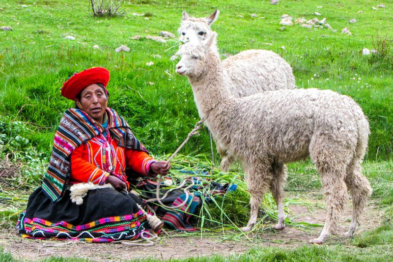 A Peruvian lady and her llama friends