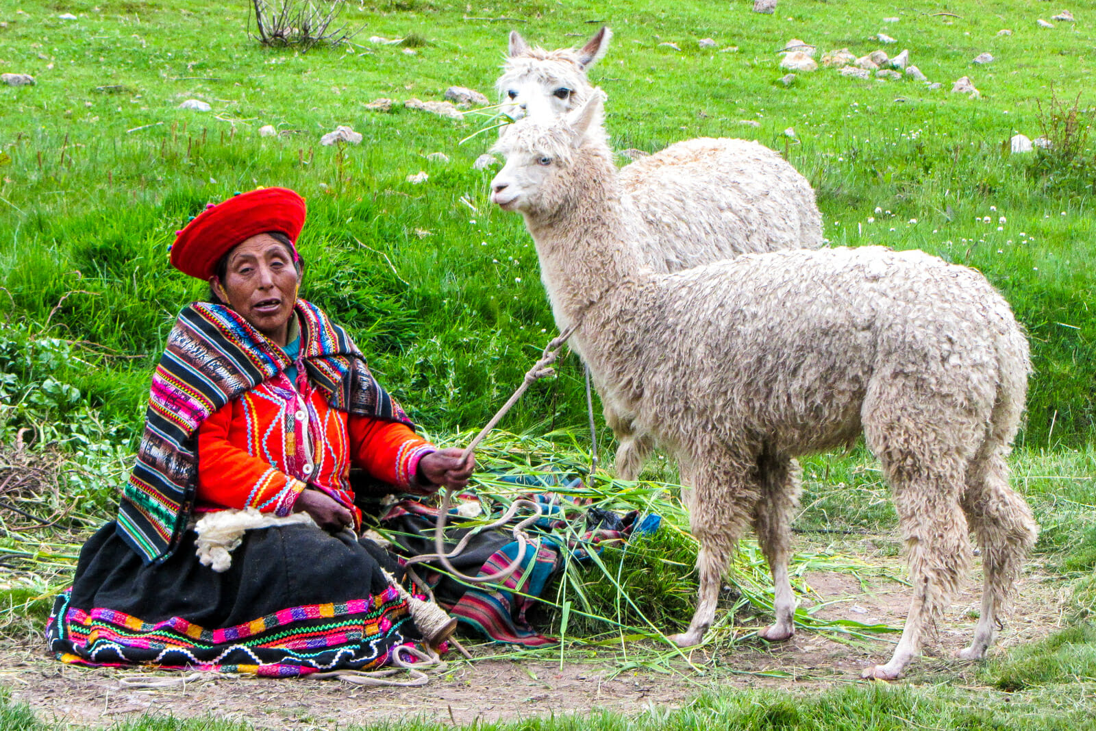 A Peruvian lady and her llama friends