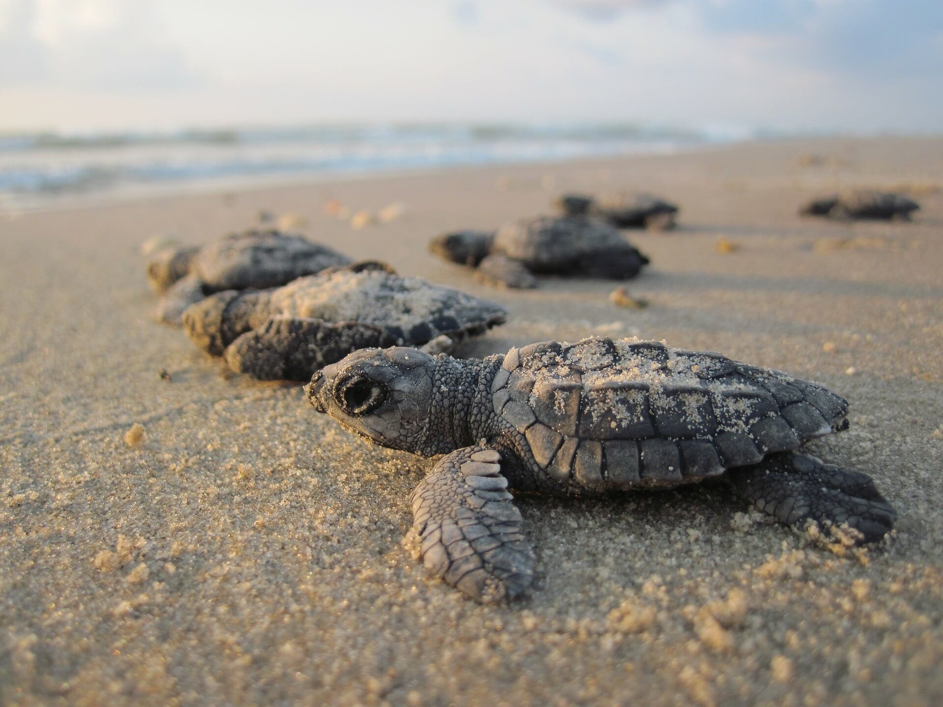 The Baby Sea Turtles of Acapulco