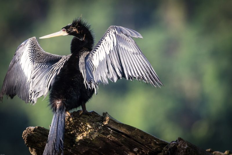 The biodiversity of Costa Rica's birds