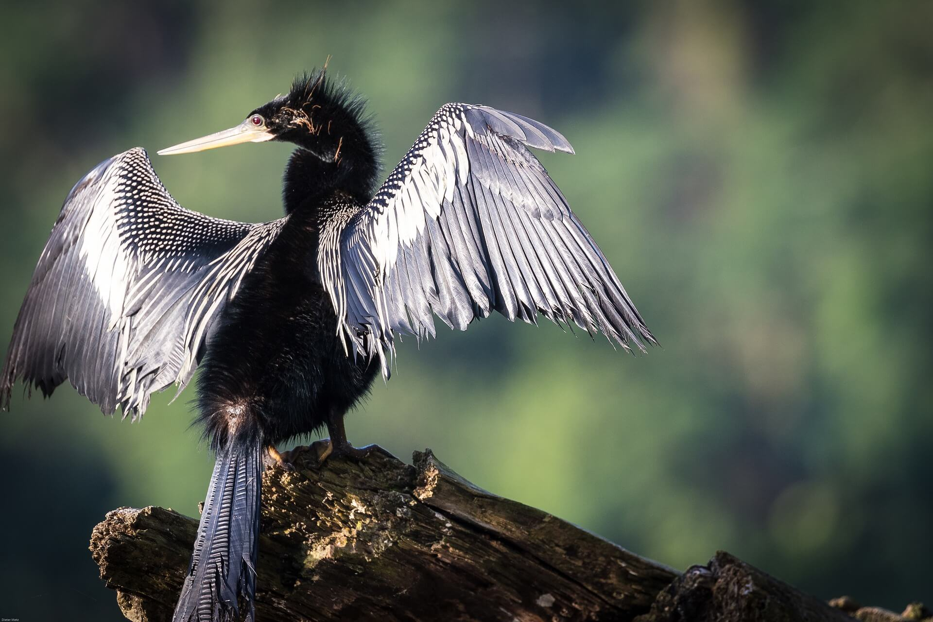 The biodiversity of Costa Rica's birds