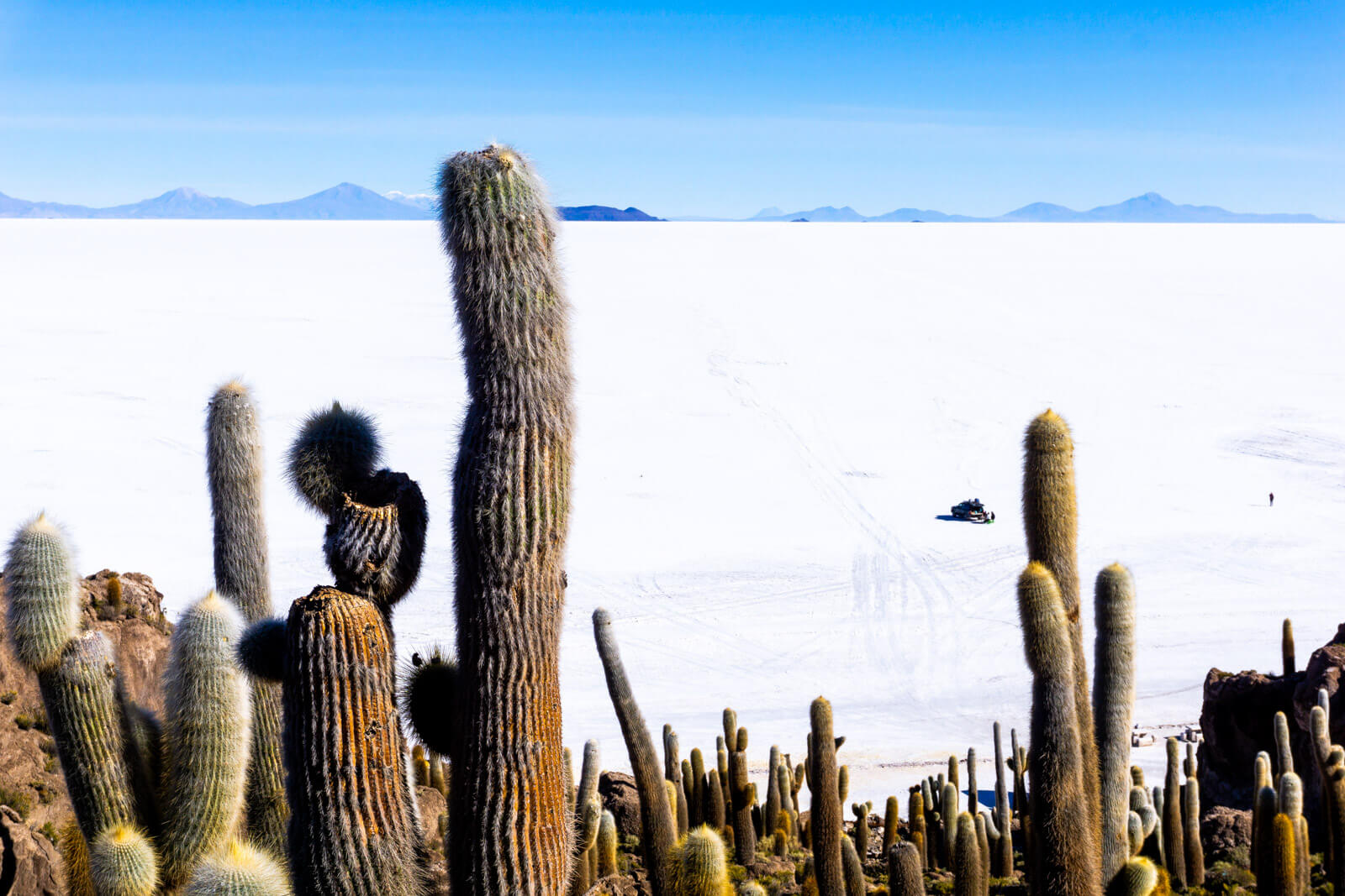 Cactus, cactus and more cactus at the Salar de Uyuni