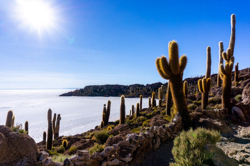 Hiking to the Top of the Cactus Island in the Salar de Uyuni
