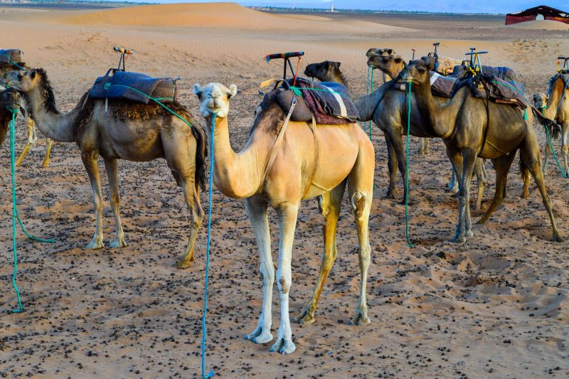 How to Get a Cheap Sahara Desert Tour in Morocco