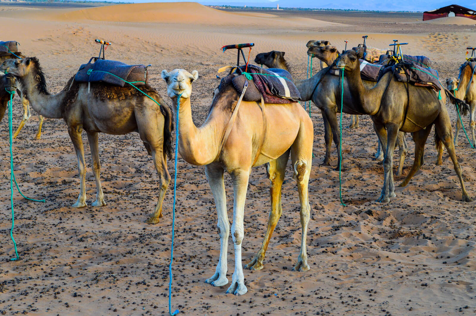 How to Get a Cheap Sahara Desert Tour in Morocco