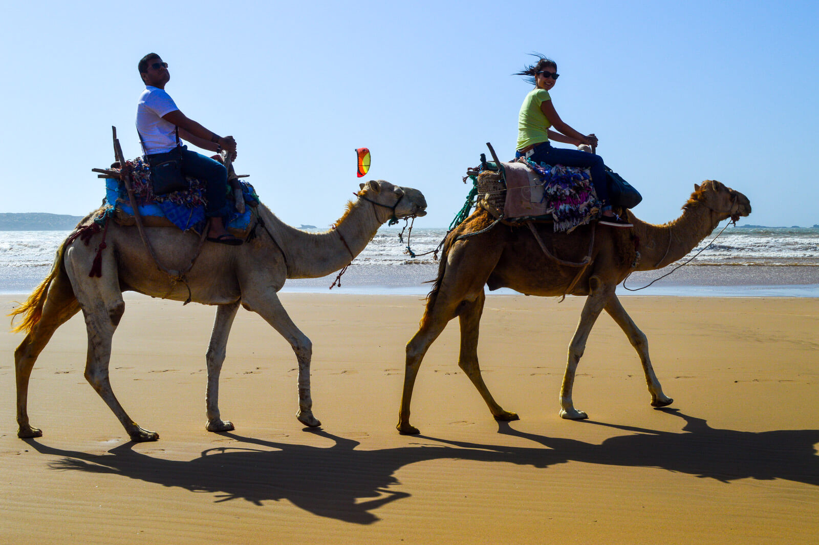 Riding camels at the beaches of Essaouira