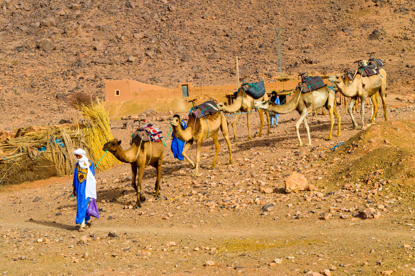 The Bedouin of Morocco