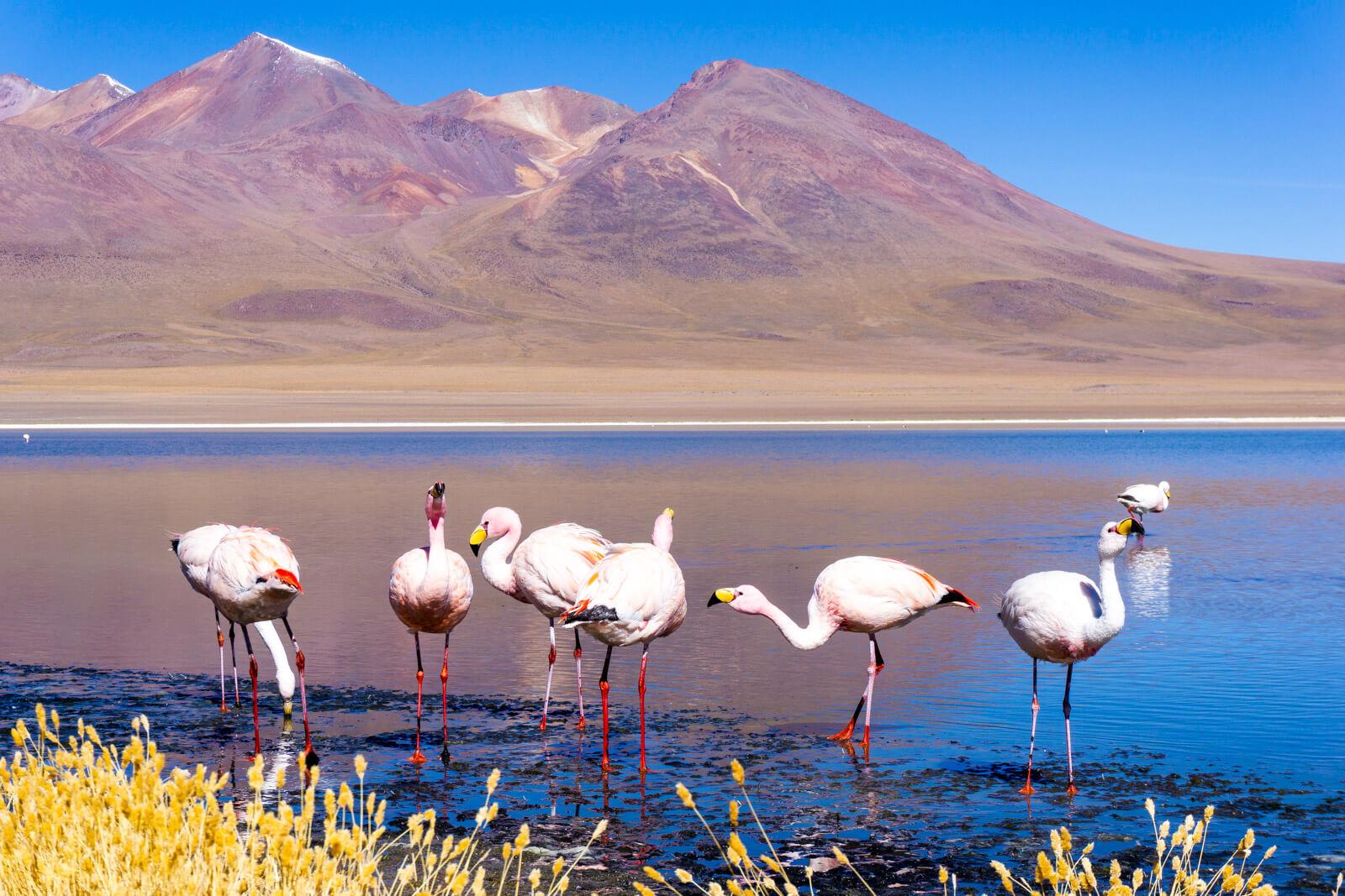 The Flamingos of Bolivia, roadtrip from Atacama to Uyuni