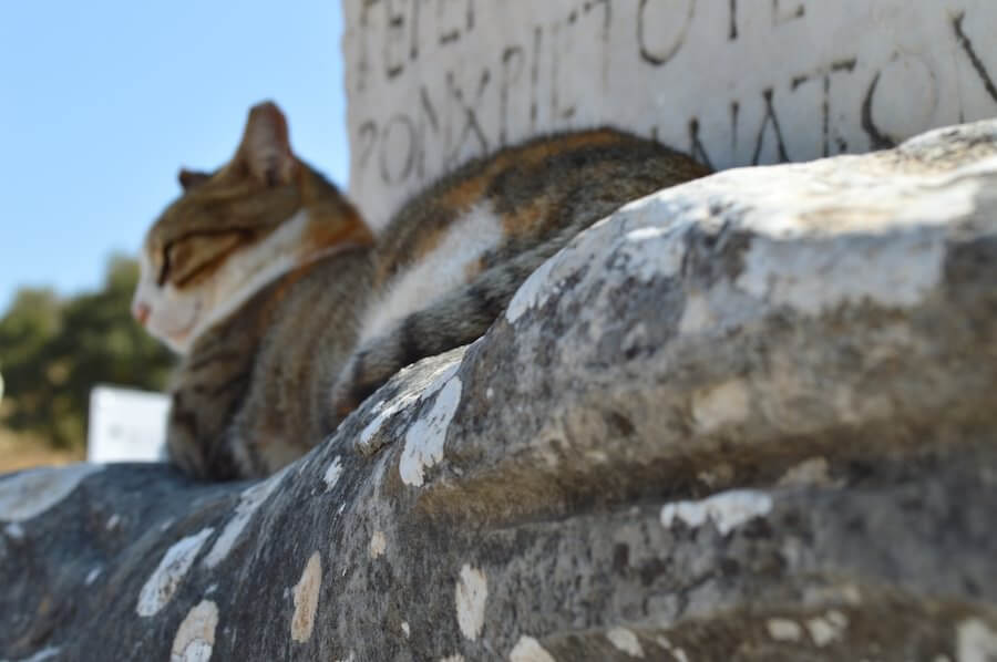 Cats at Ephesus