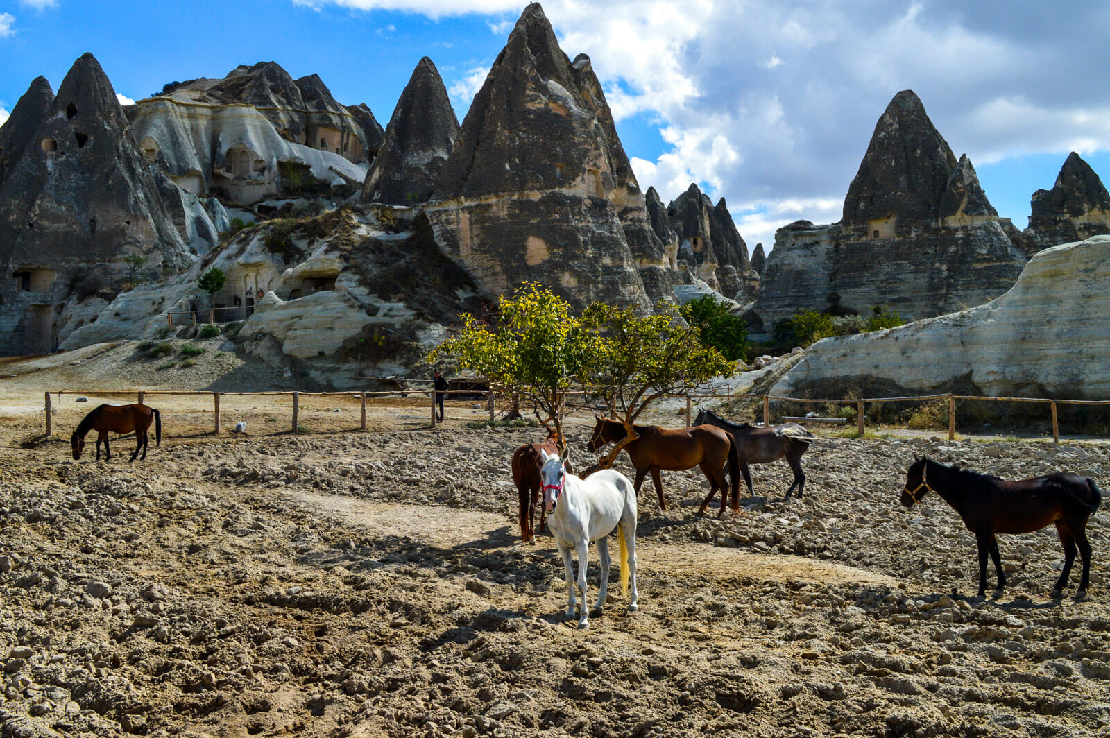 Cappadocia, land of beautiful horses