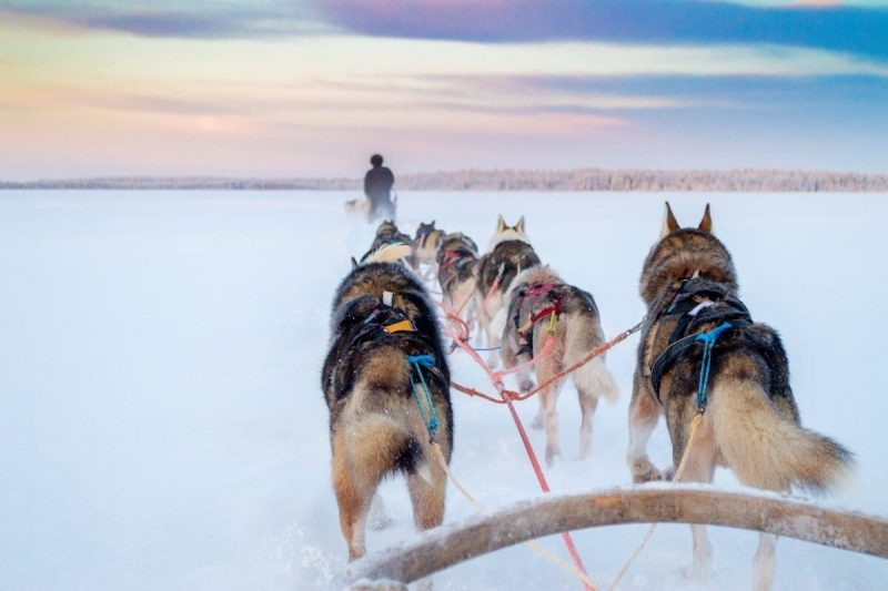 Husy racing in frozen lake Levi Lapland