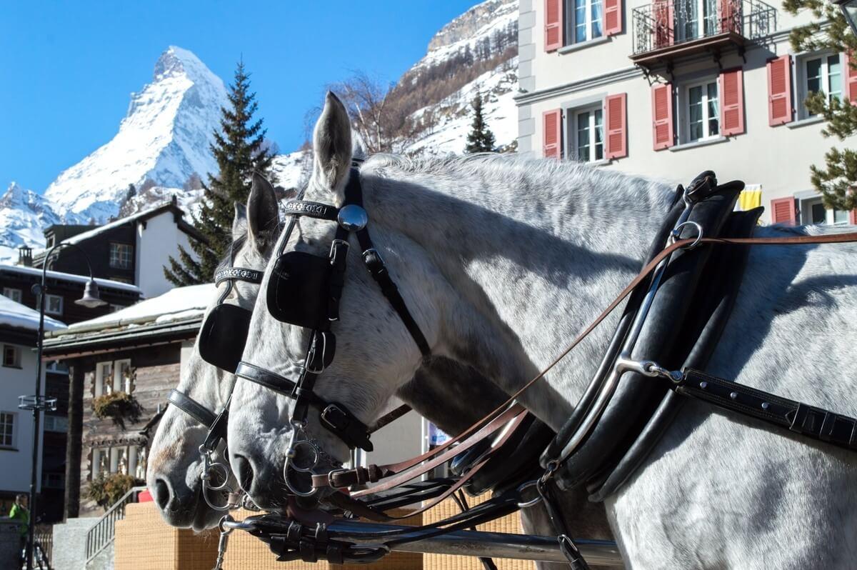 Horses at Matterhorn