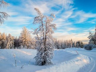 The white fluffiness of the snow in Lapland