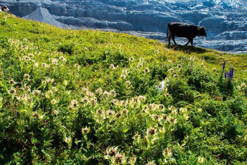 Nature at the Jungfrau region of Switzerland