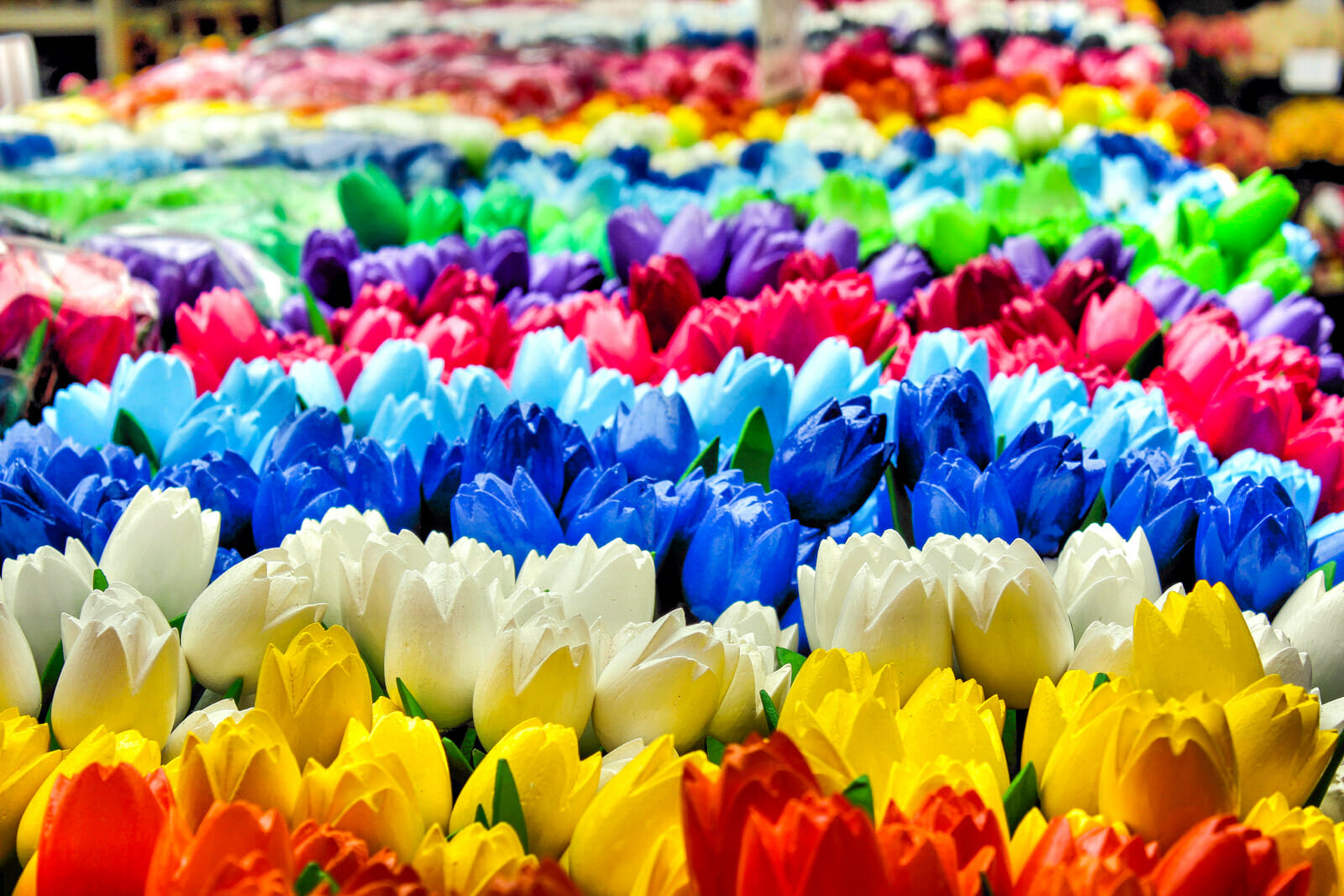 The colorful Tulips of Amsterdam