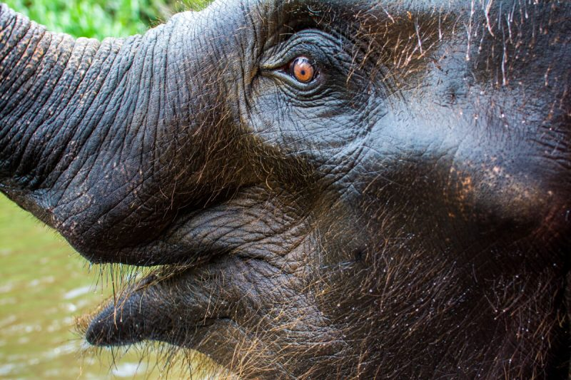 Elephant Riding in Chiang Mai, a controversial topic now and ever