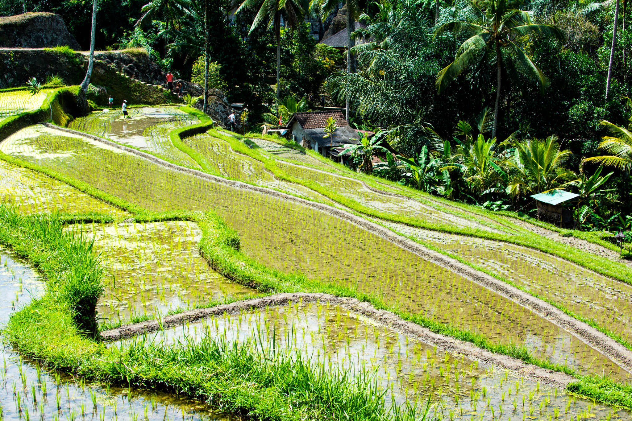 Is Bali worth visiting? Is Bali overrated?