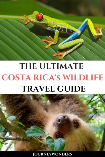 The Ultimate Costa Rica's Wildlife Travel Guide