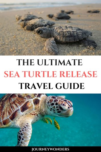 The Ultimate Sea Turtle Release Travel Guide