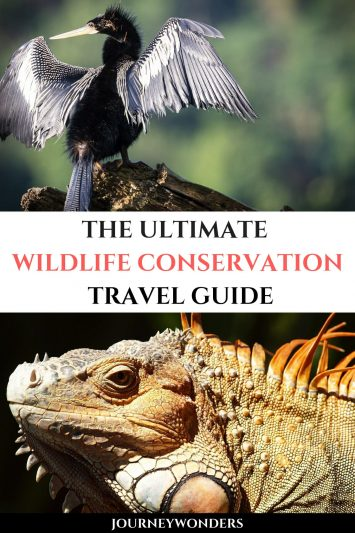 The Ultimate Wildlife Conservation Travel Guide