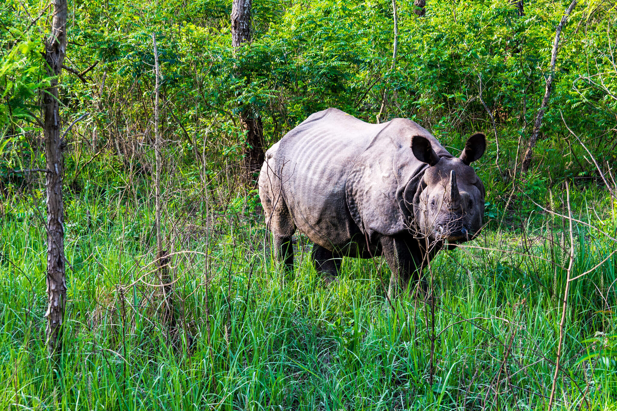 Finding chubby unicorns aka rhinoceros in Chitwan National Park