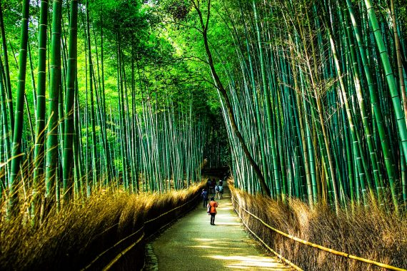 48 Hours in Kyoto Itinerary of Wonders
