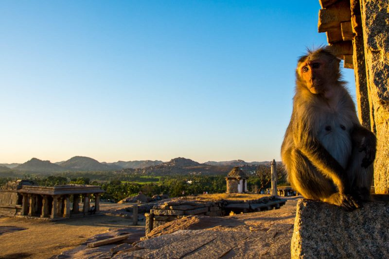 Sunset Monkey at Hampi, Karnataka
