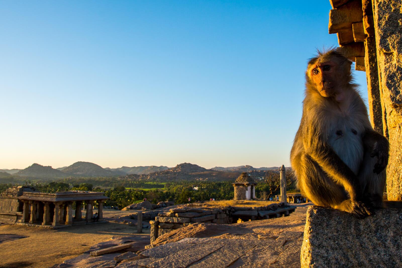 Sunset Monkey at Hampi, Karnataka