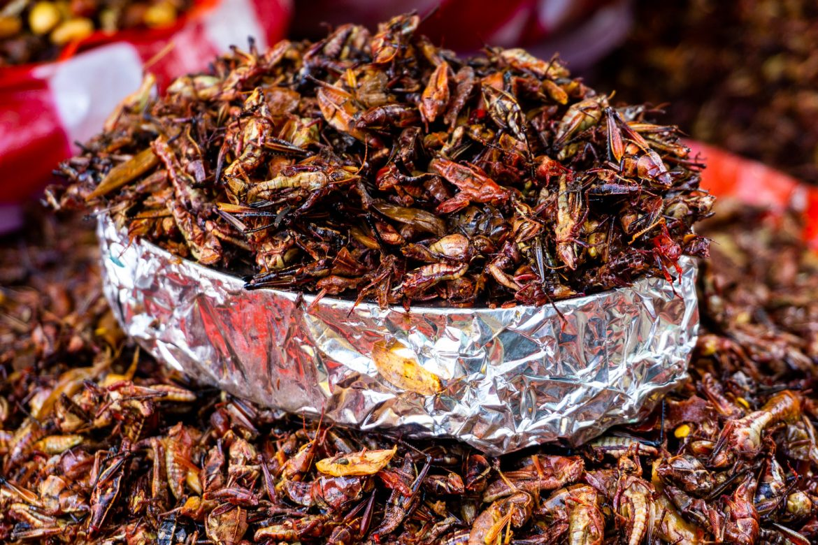 Crickets AKA Chapulines, a culinary delight