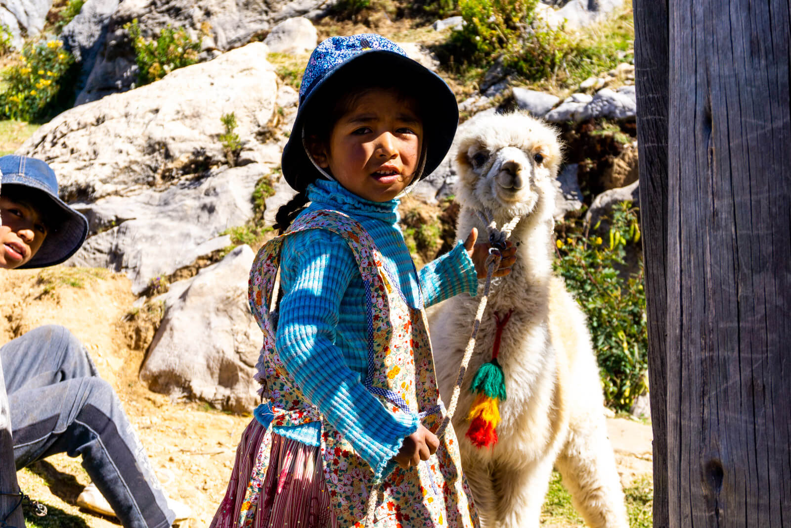 A cute Bolivian girl with her baby llama