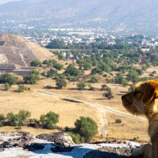 Dog of Wonders at the Teotihuacan Pyramids