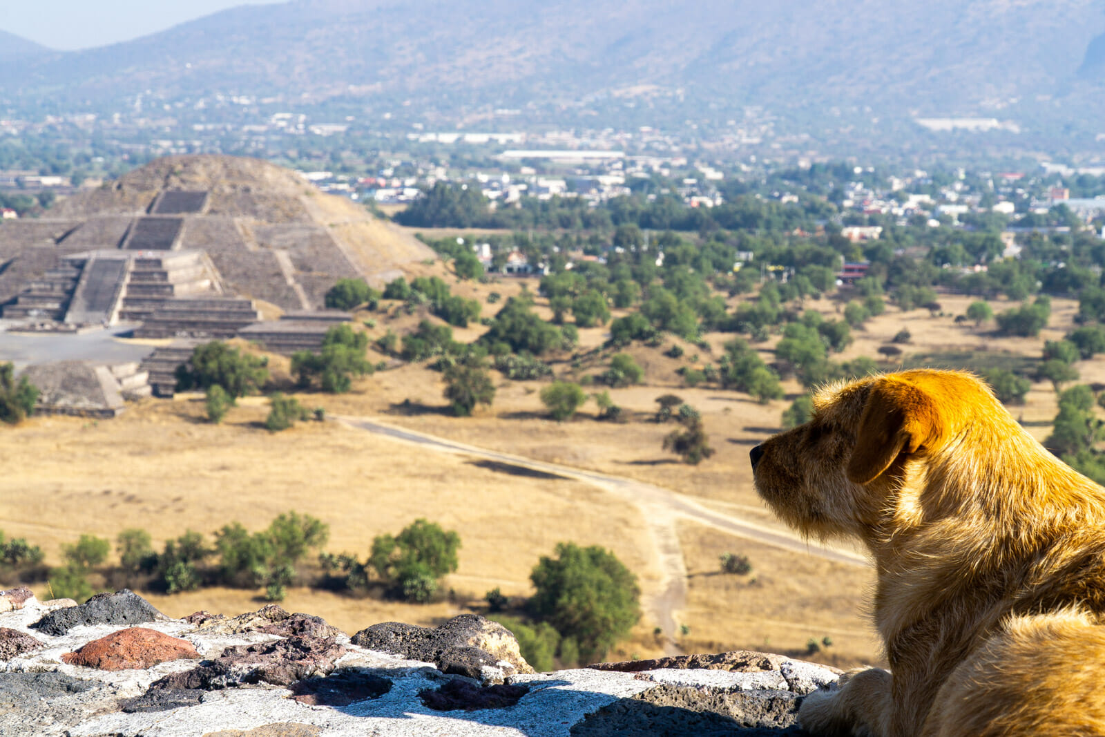 Dog of Wonders at the Teotihuacan Pyramids