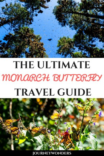 The Monarch Butterfly Migration in Mexico, All You Need to Know