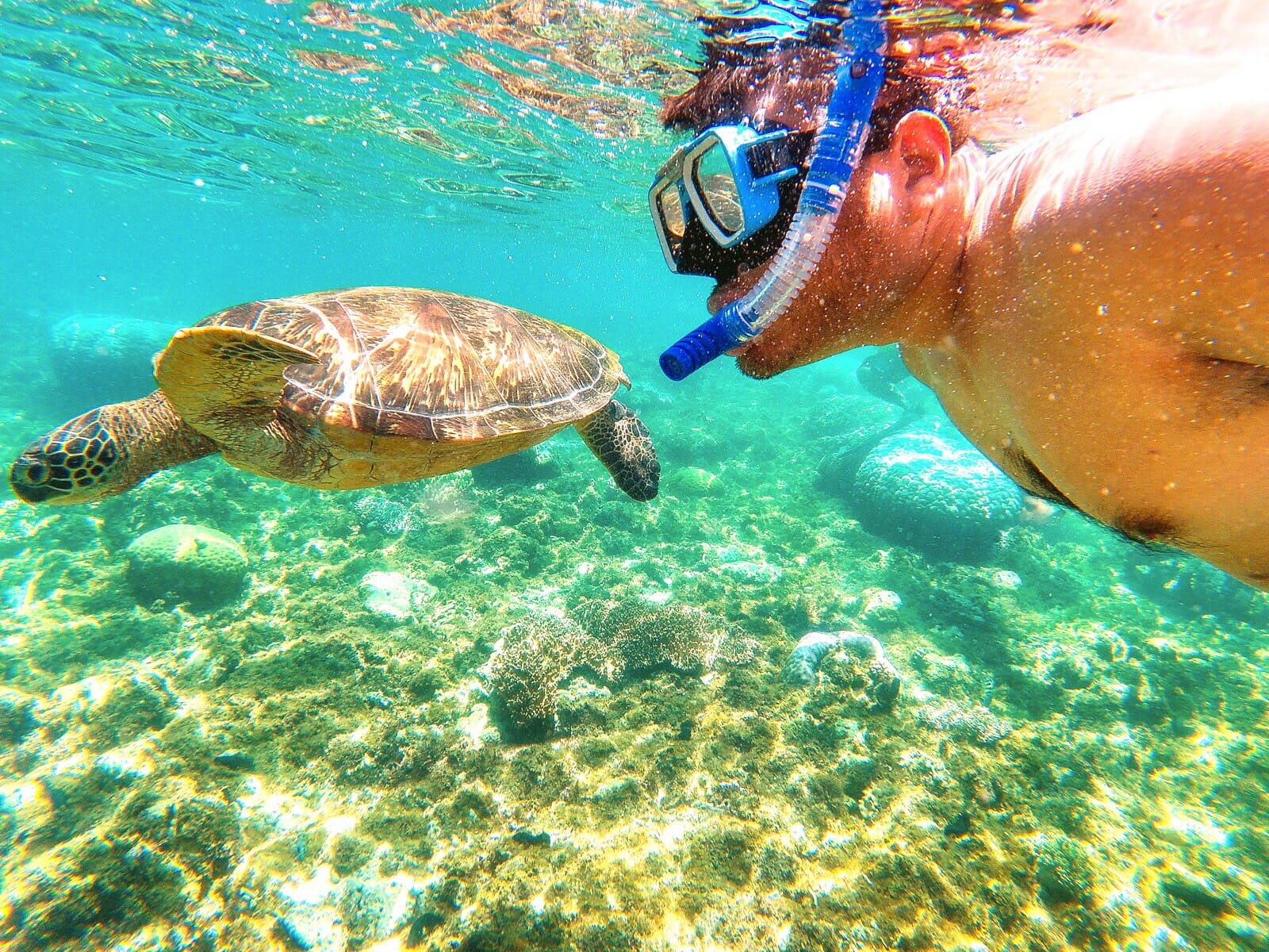 Swimming with Sea Turtles in Apo Island, Philippines